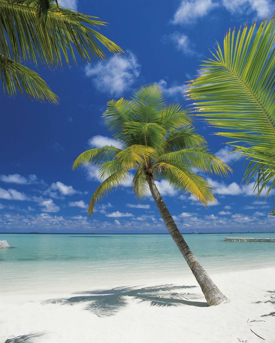 Пляж с пальмами то